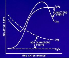 Ethylene post harvest graph illustration