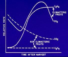 ethylene-post-harvest