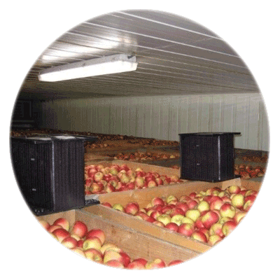 Warehouse cooler with filters and bushels and apples
